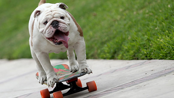 longest-human-tunnel-travelled-through-by-a-skateboarding-dog-header_tcm25-405507
