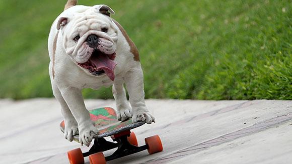 longest-human-tunnel-travelled-through-by-a-skateboarding-dog-header_tcm25-405507
